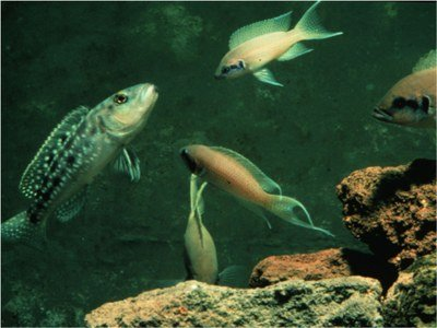 Fishes defending in group